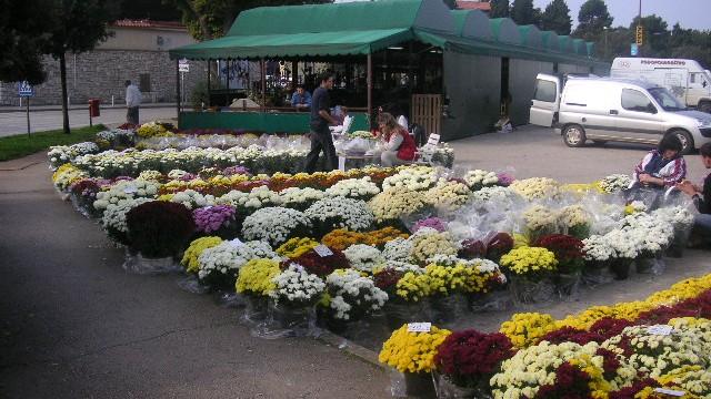 Cvijeće na parkiralištu
